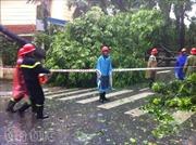 Mưa bão quật đổ nhiều cây xanh