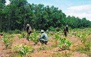 Đắk Nông đẩy nhanh tiến độ trồng rừng thay thế