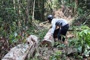 Sớm đưa vụ phá rừng khu vực thủy điện Đồng Nai 5 ra xét xử