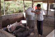 Vùng dân tộc đổi thay nhờ dự án giảm nghèo