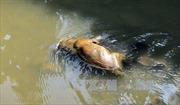 Điện Biên: Xác động vật bốc mùi trên suối Hồng Líu