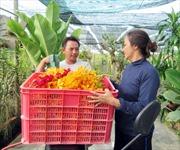 Làm giàu nhờ hoa lan Mokara