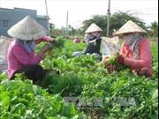 Mùa lũ, nhiều loại rau màu tăng giá mạnh