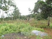 Khởi tố, truy nã bị can vụ nổ súng tranh chấp đất rừng Đắk Nông