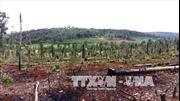 Lý giải vấn nạn tranh chấp đất rừng tại Đắk Nông