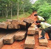 Kon Tum: Liên tiếp bắt được gỗ... vô chủ