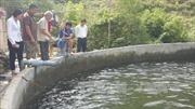 Điều tra vụ cá chết bất thường ở Sa Pa