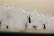 Myanmar ghi nhận trường hợp đầu tiên nhiễm virus Zika