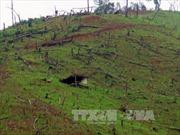 Kiểm tra việc thực hiện Đề án 79 và công tác bảo vệ rừng tại Mường Nhé