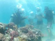 Đa dạng, phong phú tài nguyên biển Việt Nam