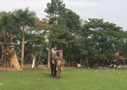 Lần đầu tiên, voi nuôi trong môi trường bán hoang dã mang thai