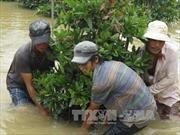 Chủ động hạn chế thiệt hại về người, tài sản khi mưa lũ