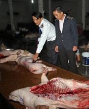 Bắt quả tang cơ sở giết mổ lợn không đảm bảo an toàn