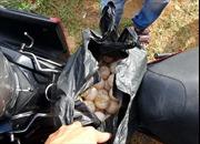 Yêu cầu khởi tố vụ án, bị can trộm 116 quả trứng vích tại Côn Đảo