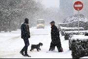 Giá lạnh hoành hành châu Âu, hơn 50 người thiệt mạng