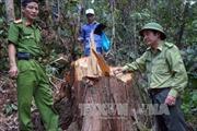 Quảng Nam tăng cường tuần tra địa bàn trọng điểm về vi phạm bảo vệ rừng