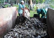 Quảng Ninh tiêu huỷ gần 900 kg cá ướp lạnh không rõ nguồn gốc