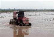 Trên 373.500 ha đã có nước gieo cấy vụ Đông Xuân