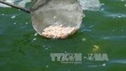 Trà Vinh khắc phục tình trạng tôm chết hàng loạt