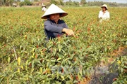Nhân rộng mô hình chuyển đổi cây trồng cạn