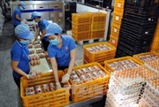 Năm 2017 nhập khẩu không quá 8.400 tá trứng gia cầm từ Liên minh Á Âu