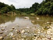 Thanh Hóa: Cá chết nổi trắng trên sông Âm