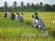 Chống hạn mặn, bảo vệ gần 30.000 ha đất canh tác vùng dự án ngọt hóa Gò Công