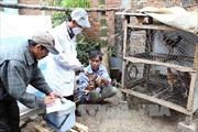 Đà Nẵng tăng cường phòng, chống dịch cúm gia cầm