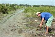 Tạo nguồn tôm nguyên liệu sạch phục vụ chế biến xuất khẩu thủy sản