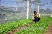 Lãi suất cho nông nghiệp công nghệ cao có thể dưới 7%/năm