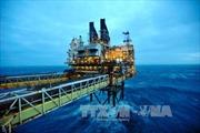 OPEC tuân thủ đầy đủ thỏa thuận cắt giảm sản lượng