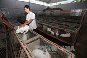 Nông dân trẻ làm trang trại, lãi gần tỷ đồng mỗi năm