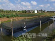 Cuối tháng 3, mặn có thể xâm nhập sâu tại đồng bằng sông Cửu Long