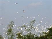Đảo Cò - kho báu trời cho của người dân huyện Triệu Sơn, Thanh Hóa