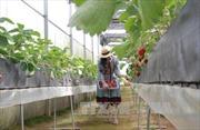 Tiêu chí xác định dự án nông nghiệp ứng dụng công nghệ cao