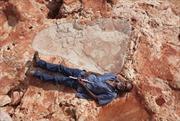 Phát hiện dấu chân khủng long lớn chưa từng thấy