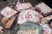 Bắt giữ 700kg chân gà rút xương nhập lậu từ Lào