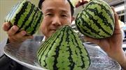 Tại sao người Nhật bỏ 600 triệu đồng mua một quả dưa