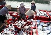 Khai thác biển phục hồi, ngư dân Nghệ An an tâm bám biển