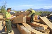 Kon Tum thu giữ khối lượng lớn gỗ vô chủ