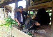 'Phao cứu sinh' cho người nghèo ở Na Hang