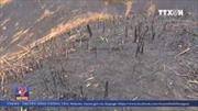 Hàng chục hecta rừng tại Đắk Nông bị tàn phá