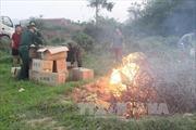 Quảng Ninh: Tiêu hủy 7.200 quả trứng gà nhập lậu