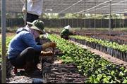 Đắk Nông công nhận 5 vườn ươm giống đạt chuẩn VnSat phục vụ tái canh cây cà phê