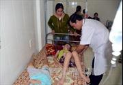 Các học sinh bị ngộ độc do ăn hạt quả cây ngô đồng ở Nghệ An đã xuất viện