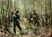 Cà Mau: 11.000 ha rừng đang ở nguy cơ cháy cấp cao nhất
