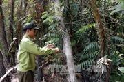 Nhiều dự án liên kết trồng rừng, trồng cao su tại Đắk Lắk thực hiện không hiệu quả