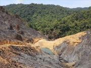 Đình chỉ 4 cán bộ kiểm lâm trong vụ hủy hoại hàng chục ha rừng tại Đắk Nông