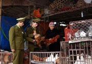 Test nhanh virus cúm A/H7N9 tại các chợ gia cầm Lạng Sơn