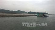 Xác định nguyên nhân hàng nghìn tấn hàu chết ở Quảng Ninh